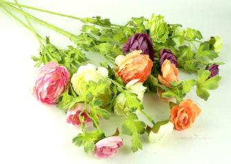 Ranunkel mit mehreren Blüten und Blättern 72cm 5ass