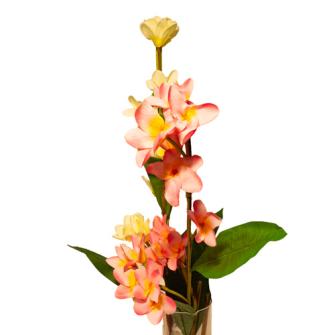Frangipani mit mehreren Blüten und Blättern 103cm 2ass