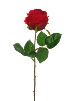 Rosenstiel rot 45cm