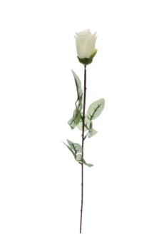 Rosenstiel creme 65cm