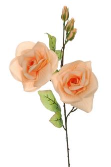 Rosenstiel pfirsich 70cm