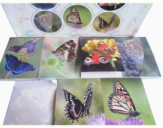 Notizblöckli 6x8.3cm Schmetterlinge 40 Blatt 6ass in Display