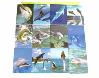 Notizblöckli 6x8.3cm Delfine 40 Blatt 6ass in Display